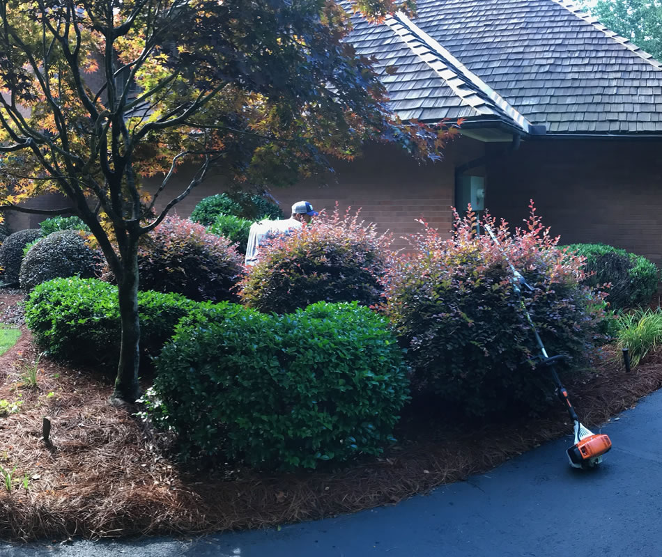 Hedge Trimming Company Greenville SC