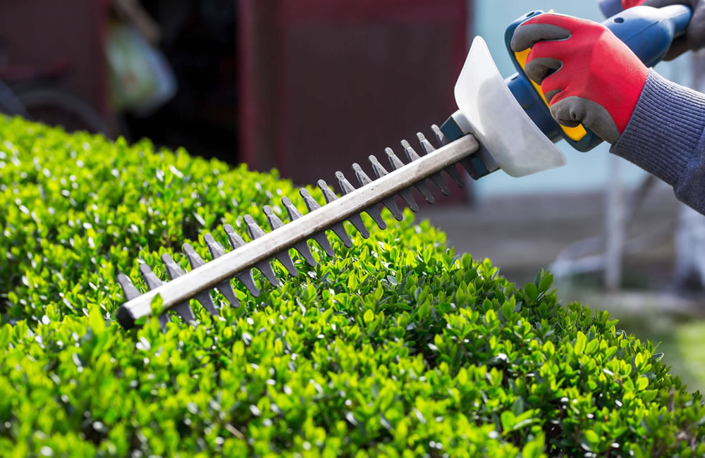 Landscaping Maintenance Greenville SC